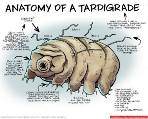 anatomy of tardigrade